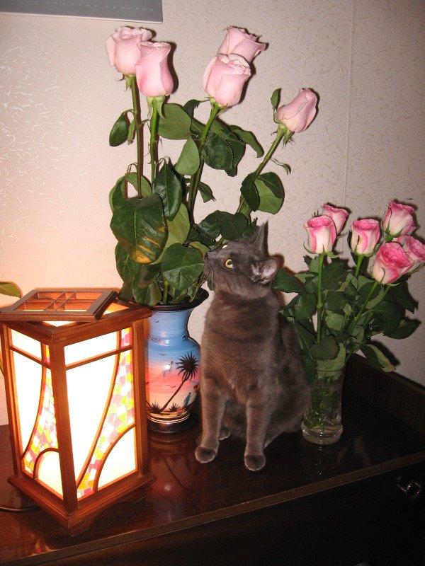 Я тоже люблю цветочки))