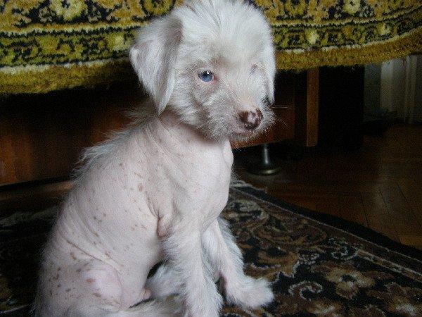 Голубые глаза и что такое -альбинизм.