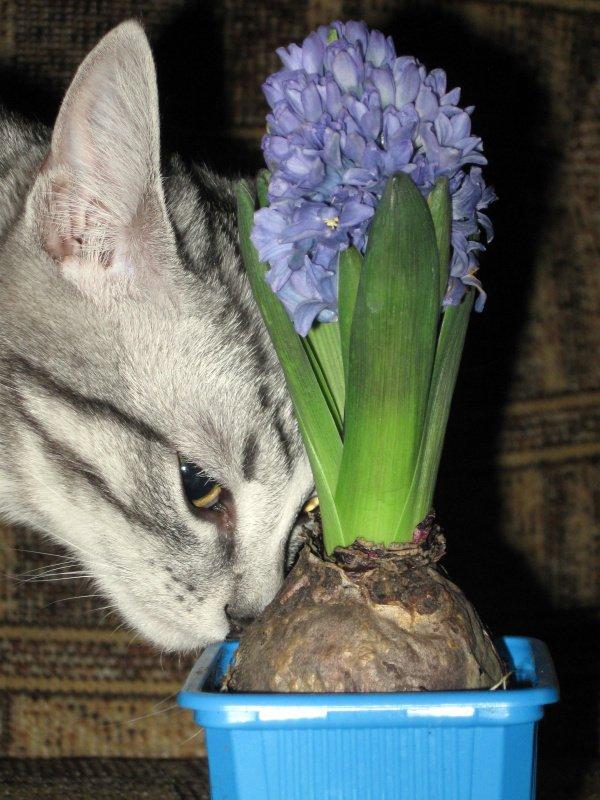 А правильно ли полит цветок?
