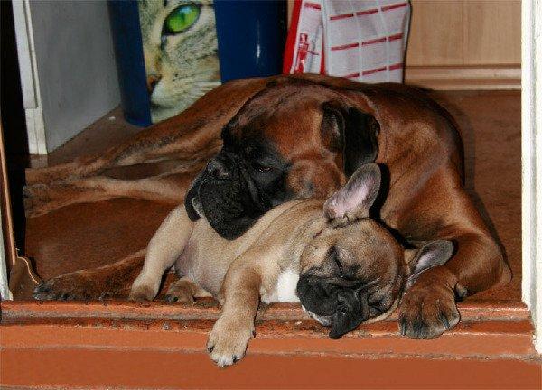 Вместе и спать веселее!