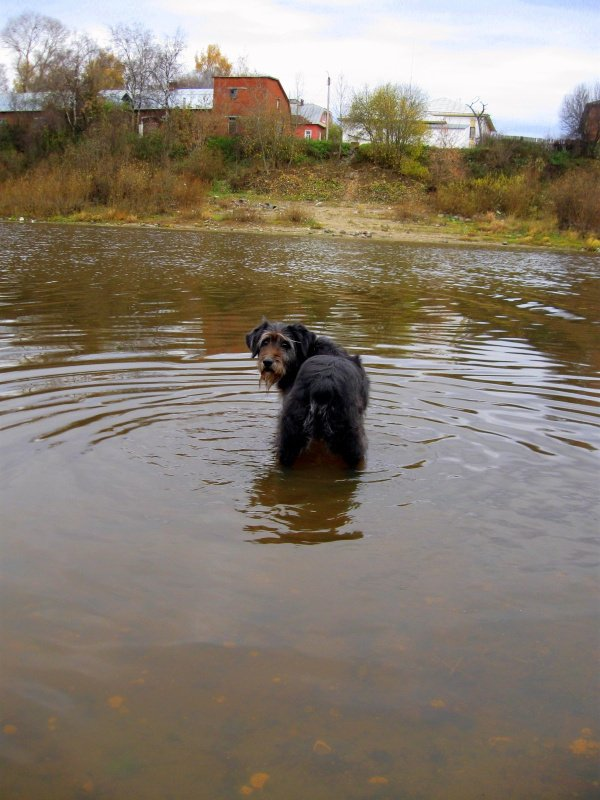 Осеннее купание