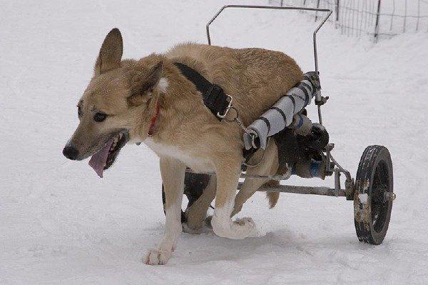 Сколько собак живет  и радует всего лишь одного Человека.