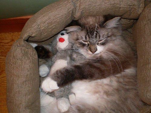 вместе веселее...спать!