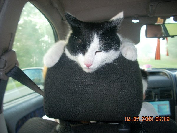 Мой любимый котик Морис