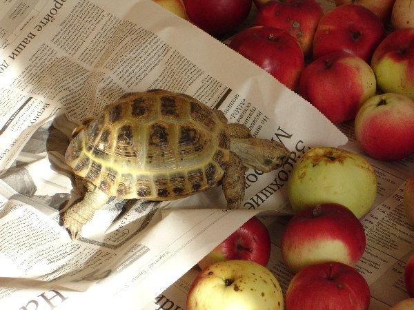 Между прочим, черепахи тоже движутся, например во время еды..