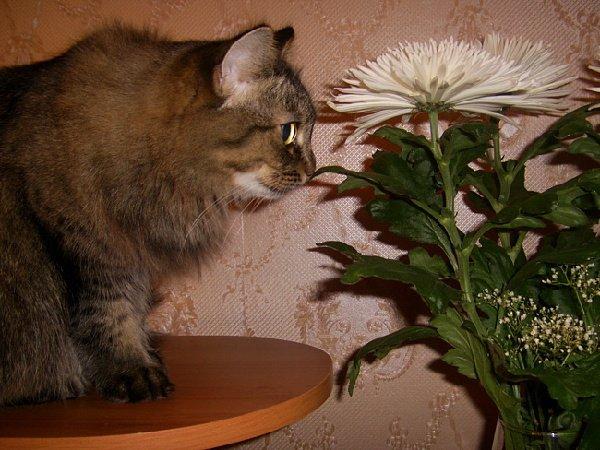Это моя Маруся, любительница цветов