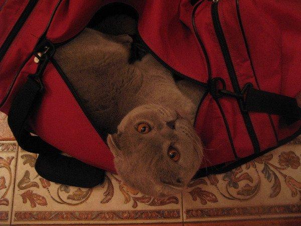 Бася - любитель в сумках полежать:)