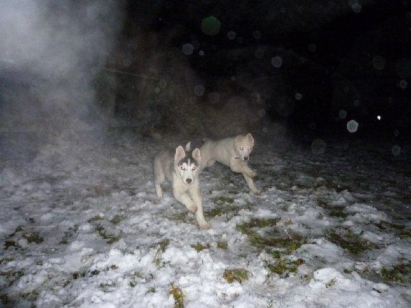 Мои щенята в полете)))