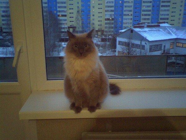 Наш Котик Томас!
