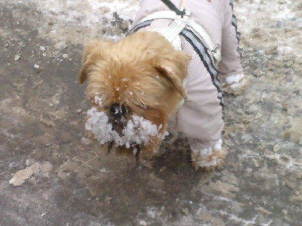 первый снег или дед мороз