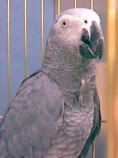 Федька-попугай)
