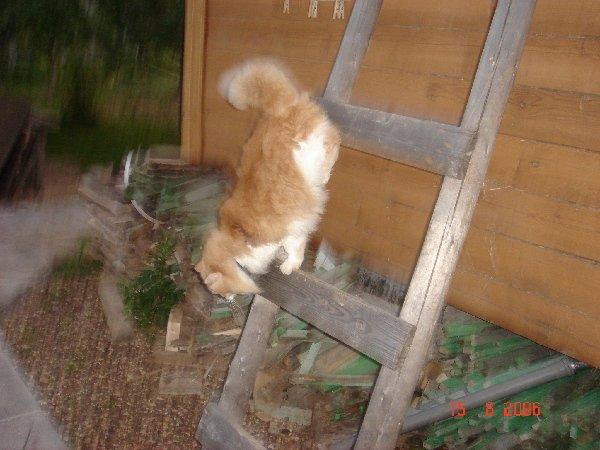 Лазила на чердак ловить мышей