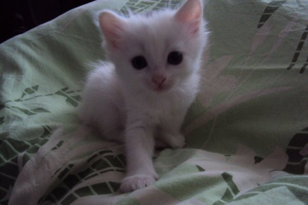 Моя кошечка Соня =)