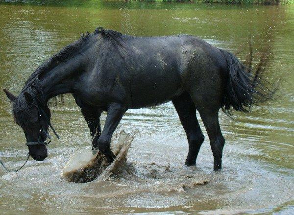 КУпание коня...