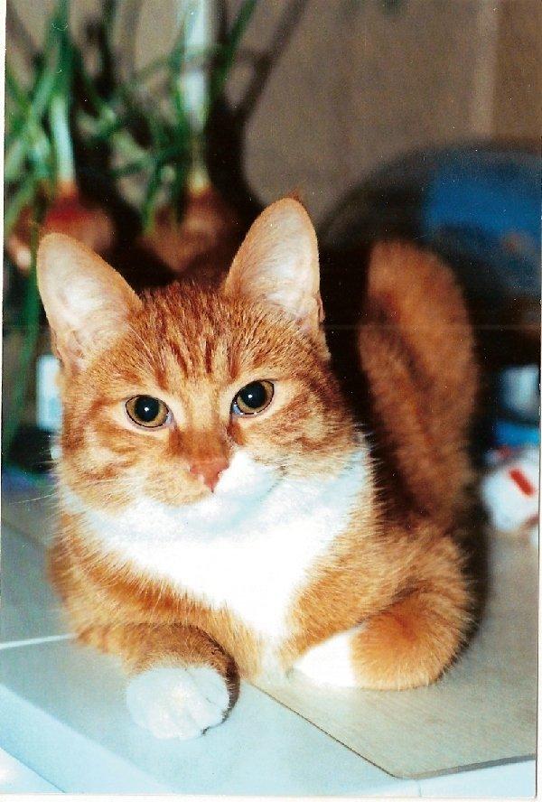 Самый любимый кот на свете - Лёва