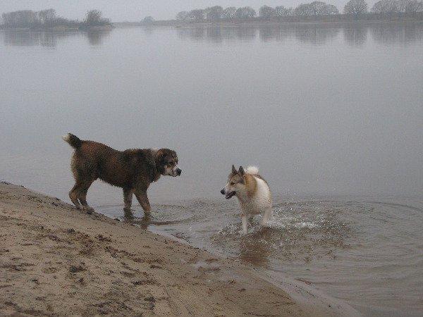 Товарищ, водичка не очень холодная? Декабрь. Ока. Купальный сезон в самом разгаре :)
