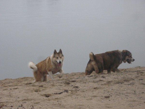 На Оке тоже есть зыбучие пески :)