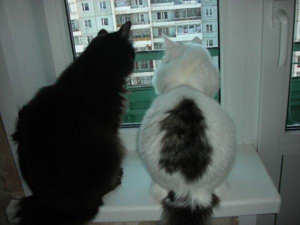 Котя и Тёма.Осень наступила,холодно,на балкон не пускают.