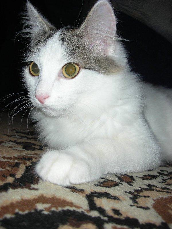 Взрослеет котик Тёма