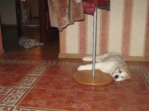 А вы говорите, как кошка с собакой :) Идилия...