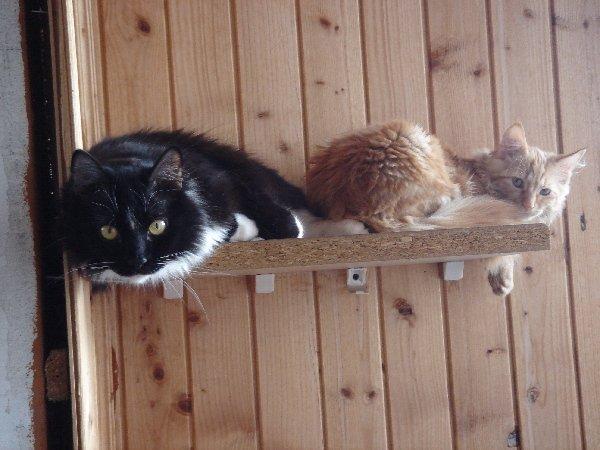 Мы -два кота, мы - красотка ....