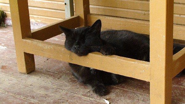 а это наш старший кот ШУРИК 16 лет спит на даче