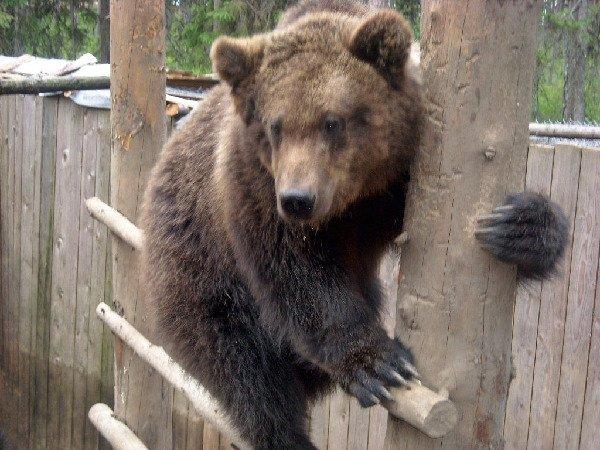 """Зоокомплекс \\\""""Три медведя\\\"""""""