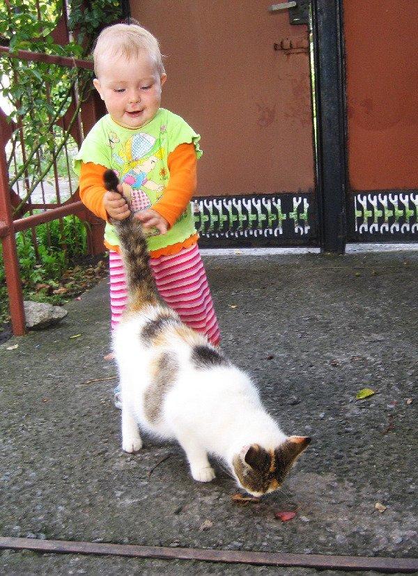Как мы любим кошек...