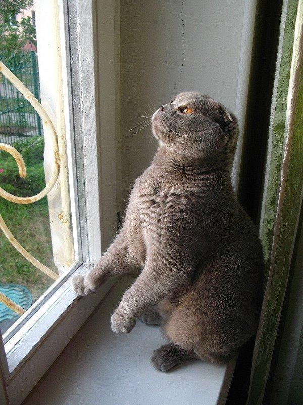 Бася наблюдает за птичками