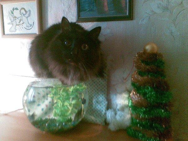 Котя с ёлочкой.