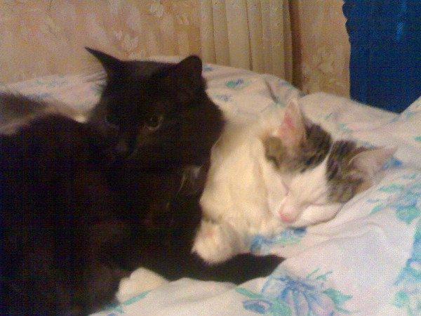 Котя скучает пока Тёма спит.