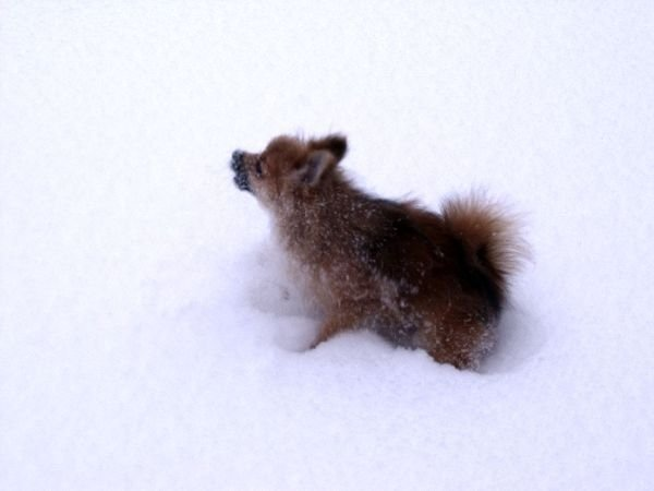 Дарлинг в снегу!