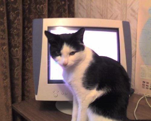 У соседей через дом есть кот по кличке Барсик. Однажды он залез под одеяло и там шарялся, а потом носился по комнате. Он так просился от туда уйти, что таким голосом мяукнкул... У меня еще видео есть с его участием.