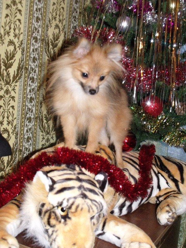 Поздравляю всех с годом тигра!