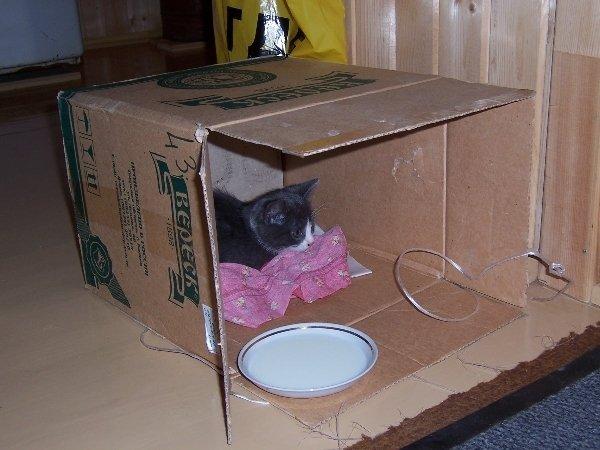 Конура для котенка