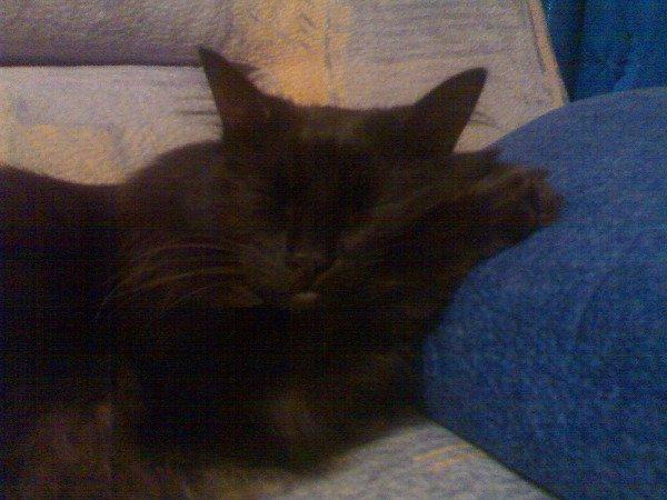 Котька спит.