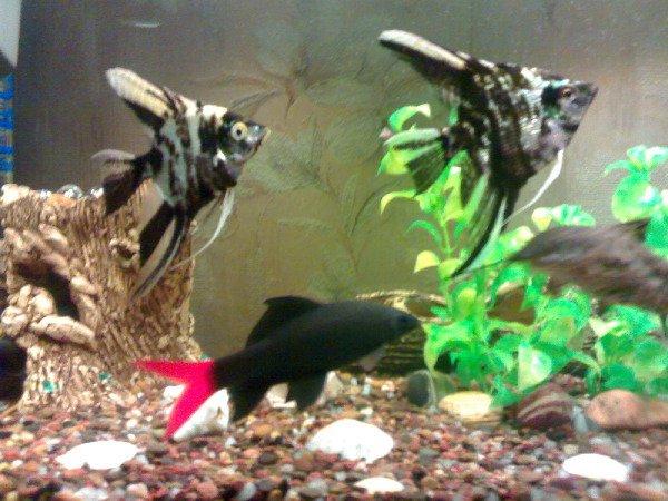 Наши рыбки...
