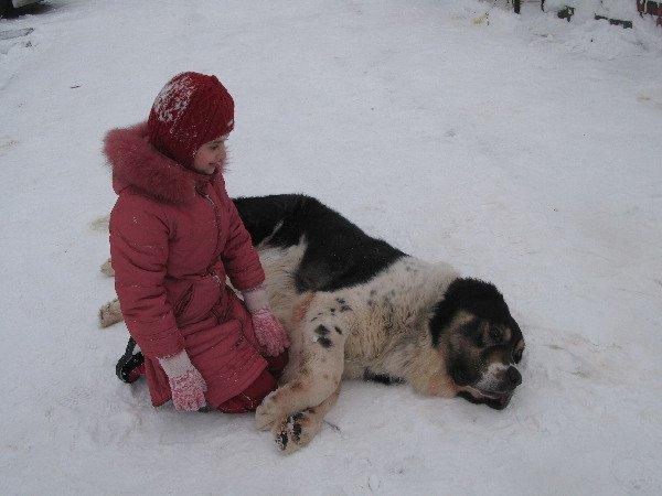 Акбай задумался о своём, о собачьем...