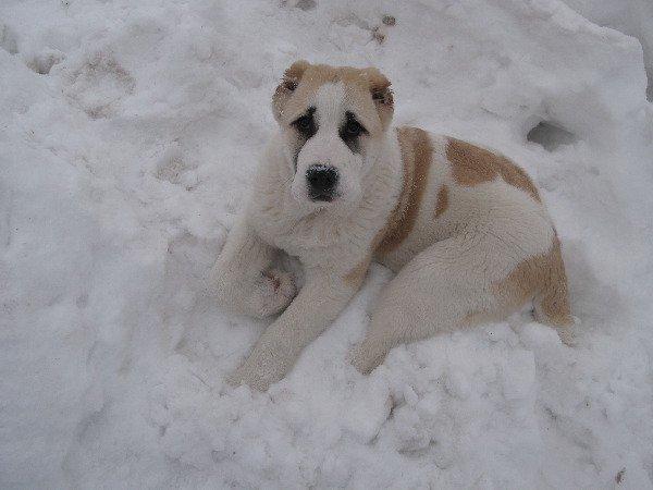 Пьеро в собачьем обличии :)