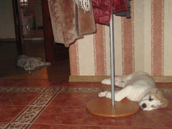 кошачье-собачья идиллия