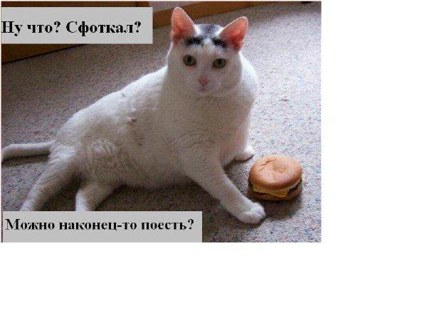 кот и булочка