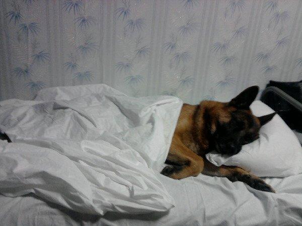 Устал! Надобны поспать пока хозяйка не видет!