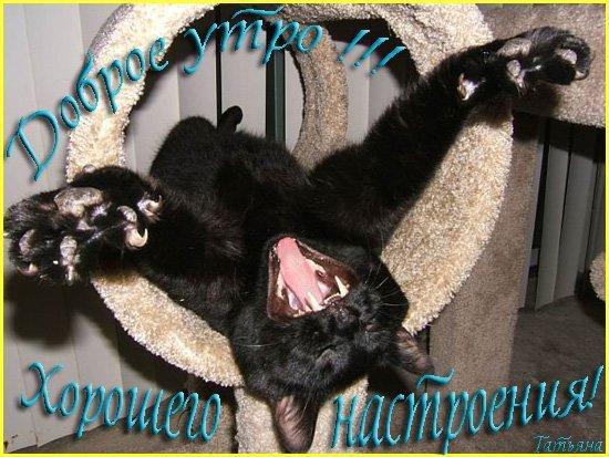 Кошка.Магия и суеверия!