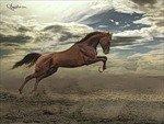 Ветер-конь