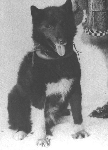 Балто - пес, который стал легендой