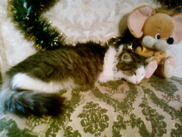 Стих о том, как у меня появилась моя кошка - Ксюша!