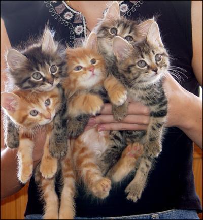 Интересные факты о кошках...