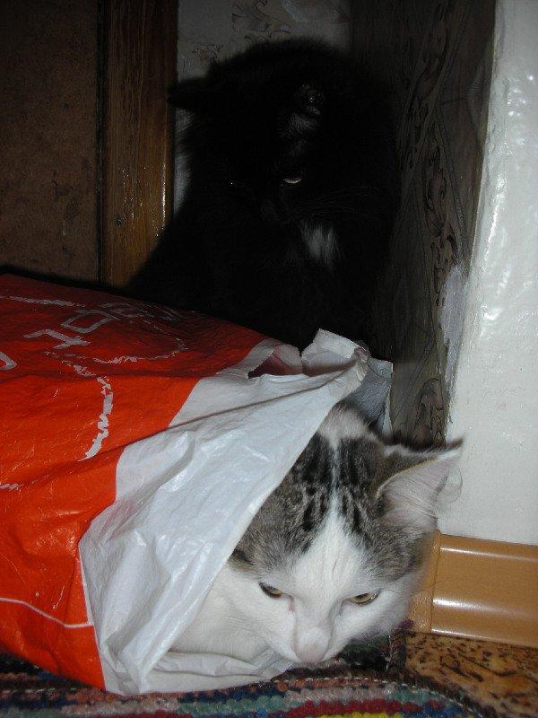 Тёма в пакете,Котя наблюдает.