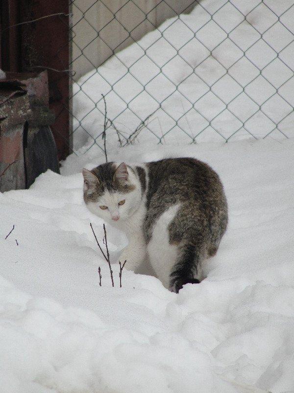 деревенский кот Кузя