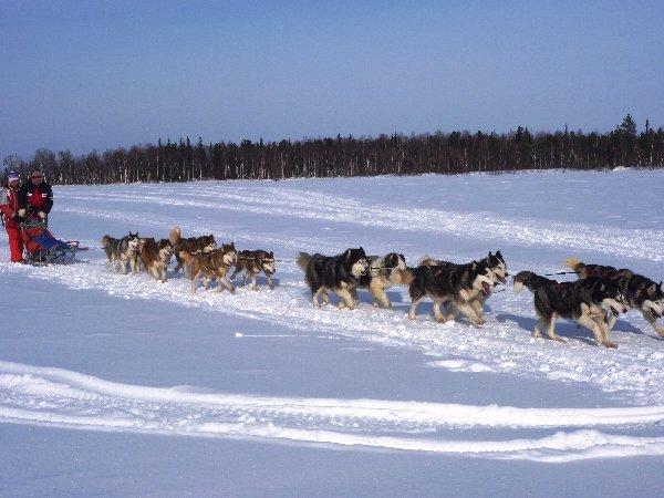 Путешествие Аляскинских Маламутов и Сибирских Хаски в г.Надым в марте 2010 года.